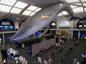 Whale of a Time: Appointment-Free Vaccinations at NYC's Museum of Natural History