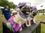 Big-winning Whippet, Pekingese Face Off at Westminster Show